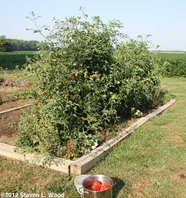 Tomatoville