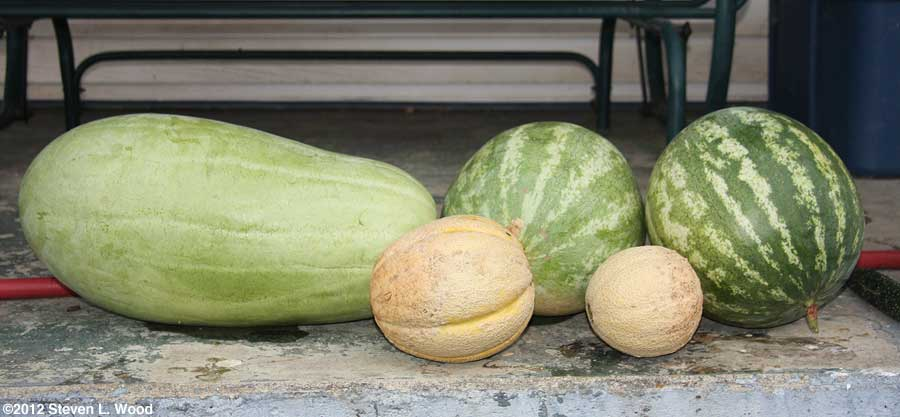 Melons on porch