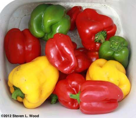 Bucket of peppers