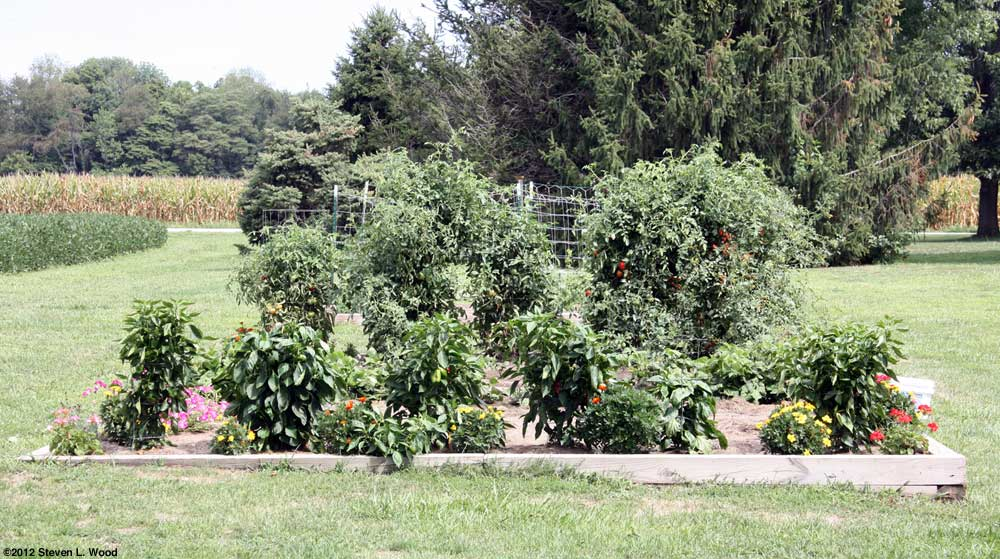 Peppers in main garden