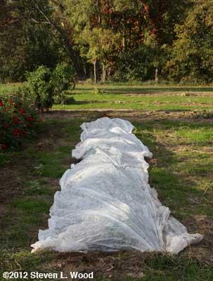 Covered potato row