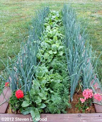 Onion-beet-carrot rows