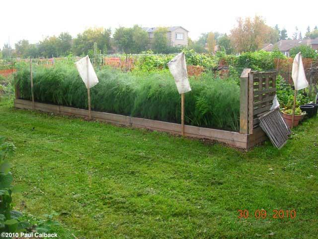 Asparagus Raised Bed Build
