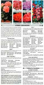 Stokes' geranium page