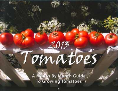 Tomatoes 2013