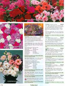 Twilley - impatiens
