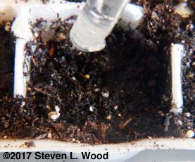 Seeding and melting pellet