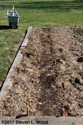 Row with mulch pulled back