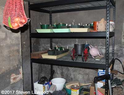 Shelves storing dormant gloxinias