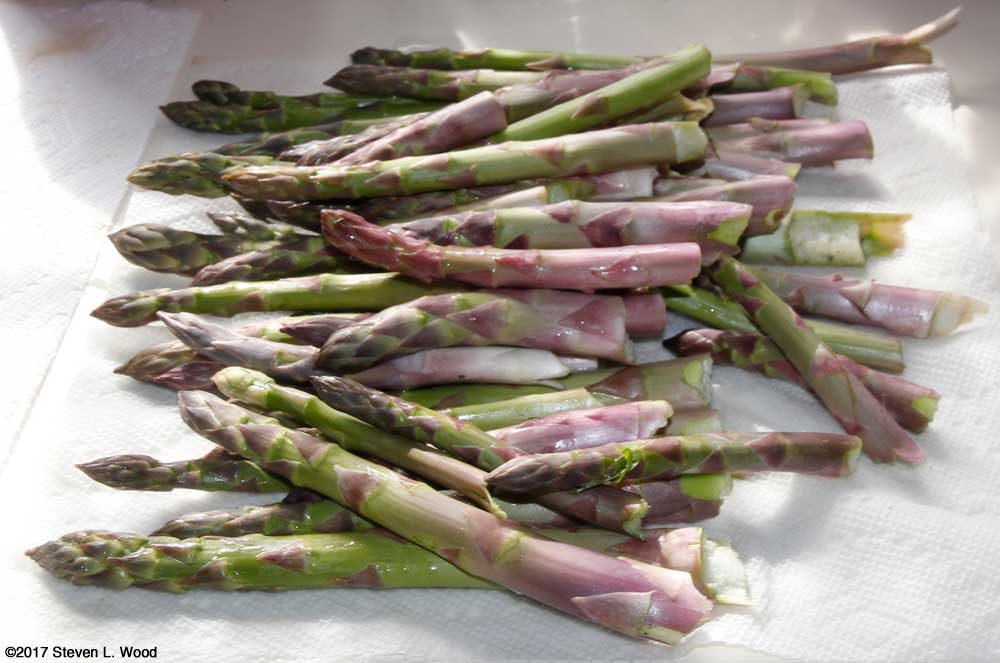 Freshly picked asparagus