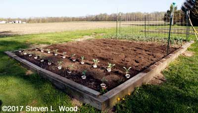 Main raised bed tilled