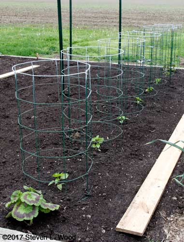 Peppers and pepper cages