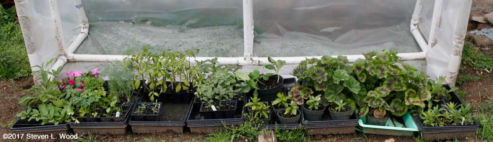 Cold frame, April 22, 2017