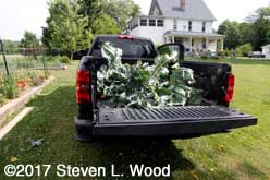 Truck loaded with brassica plants to compost