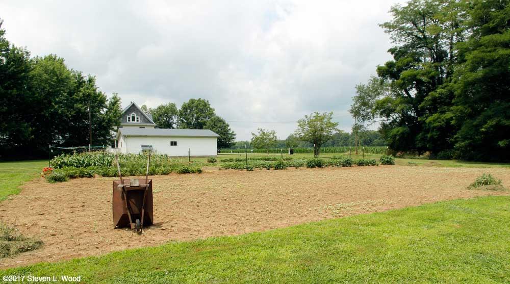 East Garden - buckwheat geerminating