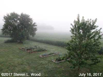 Our Senior Garden in fog - July 16, 2017