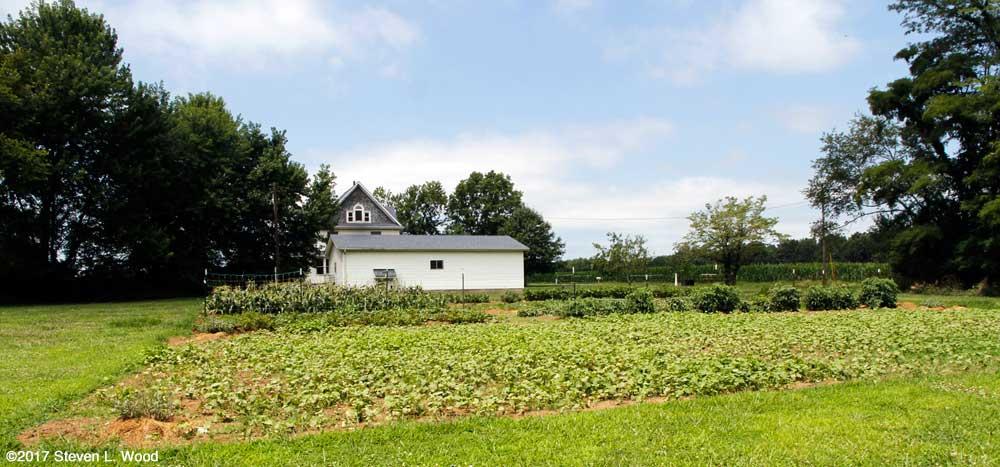 Buckwheat and East Garden