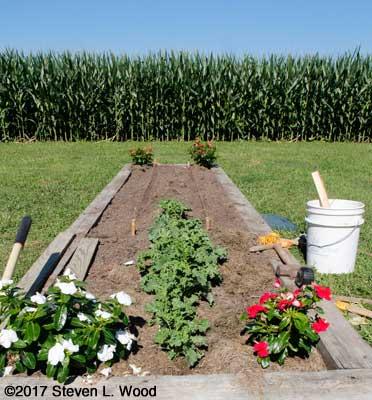 Kale bed strung for planting