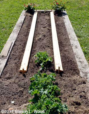 Boards laid to hold in soil moisture