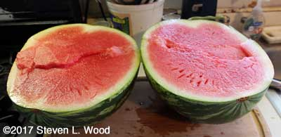 Cut Farmers Wonderful seedless watermelon