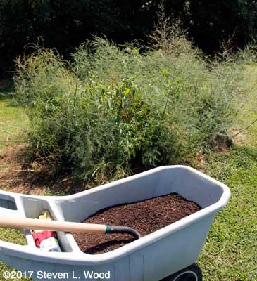 Compost for Bonnie's Asparagus