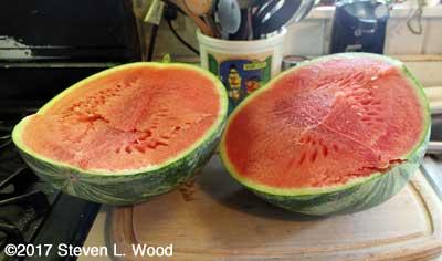 Late Farmers Wonderful watermelon