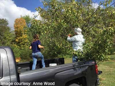 Granddaughter Katherine and Steve picking apples