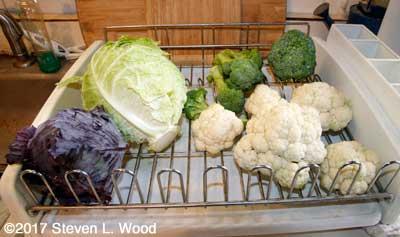 Cabbage, cauliflower, and broccoli
