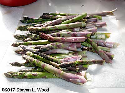 Fresh picked asparagus