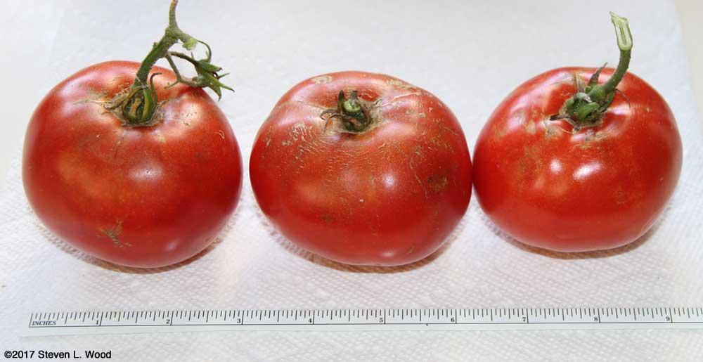 Later Earlirouge tomatoes