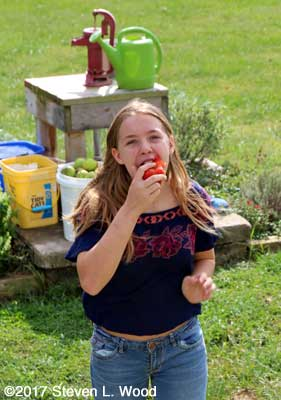 Granddaughter eating ripe tomato