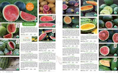 SSE Watermelon page