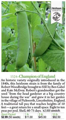 Champion of England pea detail