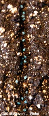 Seed in furrow