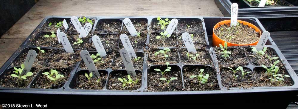Lettuce up