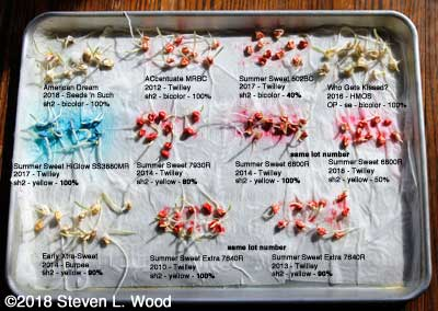 Final read of sweet corn germination tests