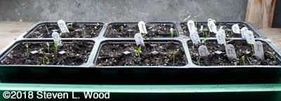 Pepper plants up