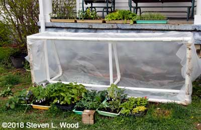Plants moved from cold frame to porch