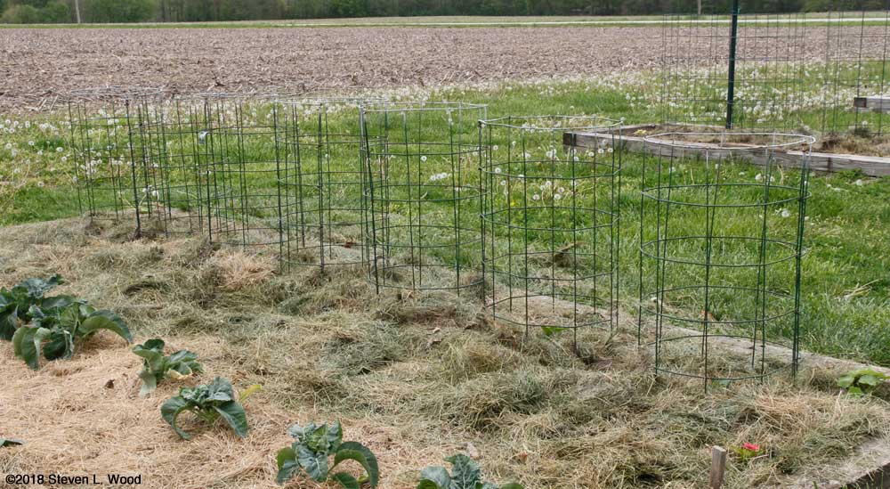 Peppers mulched