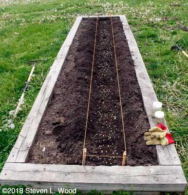 Row seeded