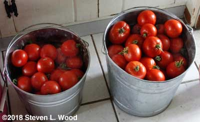 Two buckets of tomatoes