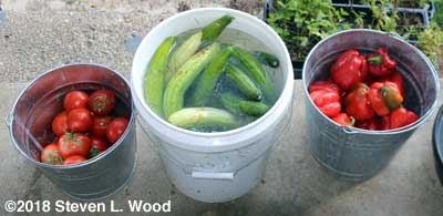 Tomatoes, Cucumbers, and peppers