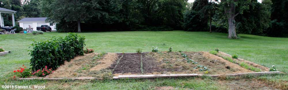 Main raised bed mostly mulched