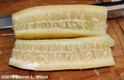Cucumber cut for seeding