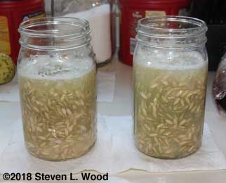 Jars of cucumber seed