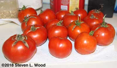 Fresh tomatoes on October 6, 2018