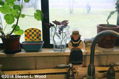 Cuttings in kitchen window