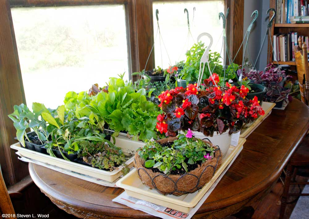Outdoor plants on dining room table