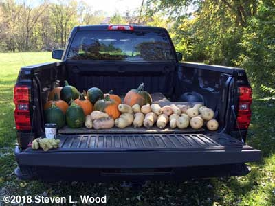 Pumpkins and butternuts destined for the food bank