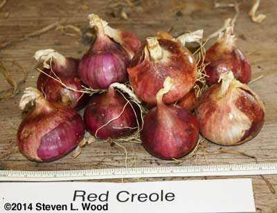 Red Creole onions